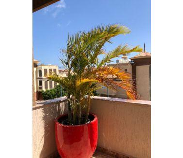 PRT80-Plant Pot